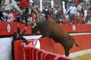 Espectacular salto de un astado de la ganadería navarra de Arriazu.