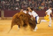 Las mejores cuadrillas se enfrentarán a las famosas vacas de Arriazu