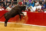 Algunas de las vacas más espectaculares de España se lidiarán en la competición