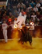El concurso con toros embolados es un espectáculo vibrante
