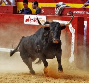 Los toros de Corbacho Grande gozaron de un excelente trapío