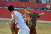 Seriedad y genio en la mirada de esta vaca lidiada en el concurso del año pasado. Foto: Alberto Barrios.