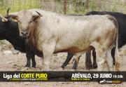 Los novillos de La Campana destacarán por su trapío y variado pelaje