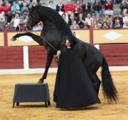Espectaculares caballos se exhibirán en este sorprendente show