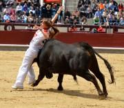 La joven Sara Mota ajustando al máximo en la plaza de toros de Las Ventas. Foto: Roberto Yebes