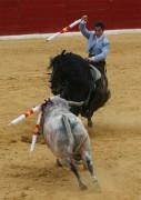 """El rejoneador Sergio Domínguez con su famoso caballo """"Gallito""""."""