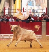 Nicolas saltando sobre un espectacular toro de Palha en 2011. Foto: www.festejospopulares.net