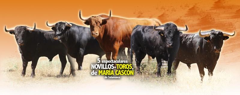 Impresionante lote de novillos para el concurso de recorte libre de Salamanca