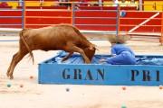 Divertidas pruebas con vaquillas son la base de este Gran Prix