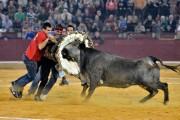 El valor y la fuerza para parar a las vacas se convierte en un gran espectáculo. Foto: Alberto Barrios