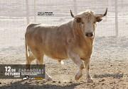 Los legendarios toros de Palha son uno de los atractivos del festejo.