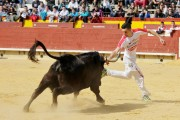 Las anillas regresan nuevamente a Castellón con el objetivo de consolidarse. Foto: Arte Taurino.