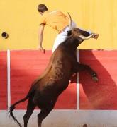 La emoción y el espectáculo está asegurado con las temidas vacas de Ozcoz. Foto: www.festejospopulares.net