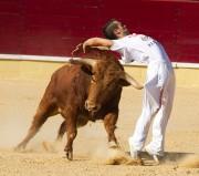 El concurso de Arévalo es una de las grandes citas de la Liga del Corte Puro. Foto: José I. Aguado.