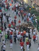 Espectacular encierro por las calles de Rincón de Soto en 2013. Foto: Eduardo del Campo.