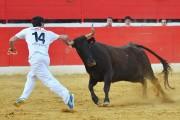 Las vacas de Ozcoz volverán a poner la emoción y el peligro al concurso de anillas. Foto: Alberto Barrios.