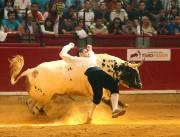 Los temidos toros de Palha volverán a deleitar con sus espectaculares pelajes y encastadas embestidas.
