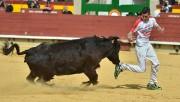 Las vacas de Ozcoz pondrán muchas dosis de emoción al concurso de anillas de Andosilla. Foto: Alberto Barrios.