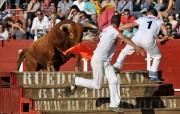 Los toros de Arriazu asombran por la espectacularidad de sus actuaciones. Foto: E. del Campo.