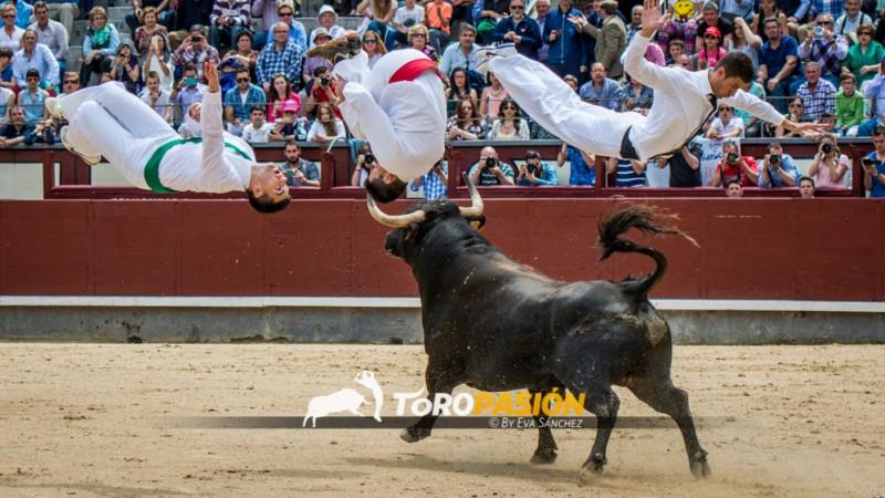 Los mejores saltadores del mundo debutarán en la plaza de toros de Zamora. Foto: Eva Sánchez.