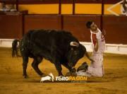 La emoción del mejor toreo a cuerpo limpio llega a Rincón de Soto. Foto: Eva Sánchez.