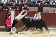 Irene Morales recortando un toro en Las Ventas. Foto: Iván García.
