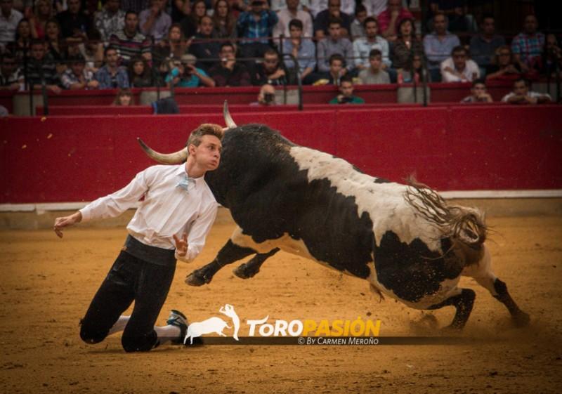 Emoción y riesgo con los mejores recortadores de España. Foto: Carmen Meroño.