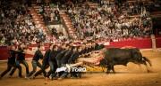 El forcón se realizará, por primera vez en la historia, con un toro de fuego durante el II Encuentro de Tauromaquias.