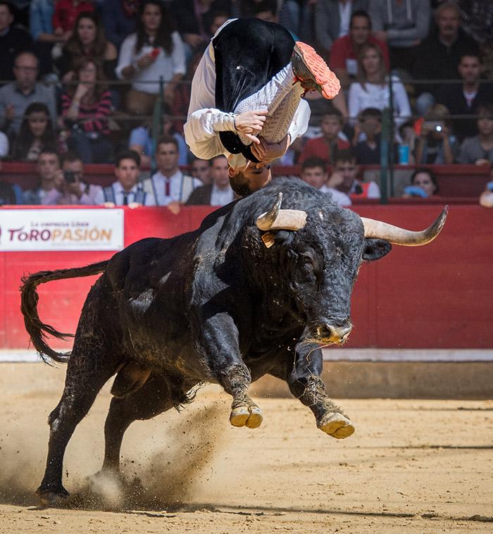 Los mejores saltadores de toros del mundo debutarán en Aguascalientes. Foto: Eva Sánchez.
