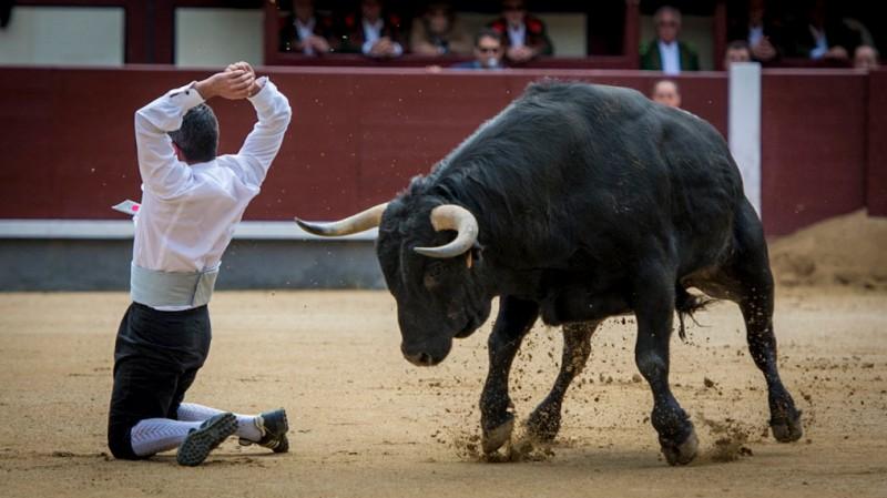 El mejor toreo a cuerpo limpio se dará cita nuevamente en Las Ventas. Foto: Eva Sánchez.