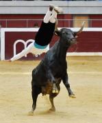 Los saltos espectaculares serán una de las bases del desafío de recortadores. Foto: Daniel Pablo.