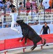 Los temidos toros de La Camarga francesa pisarán, por primera vez, el coso de La Misericordia.