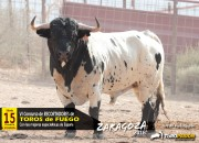 Los toros de Toropasión, todo un espectáculo cromático
