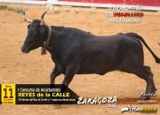La conocida vaca Norteña de La Paloma será embolada a fuego, por primera vez, para la gran final. Foto: Álvaro Marín.