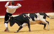 Los recortadores realizarán una exhibición ante vacas de Toropasión.