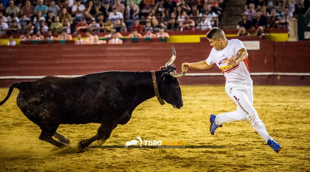 Las vacas de Ozcoz no se lo pondrán fácil a los recortadores en la Liga Toropasión de anillas.