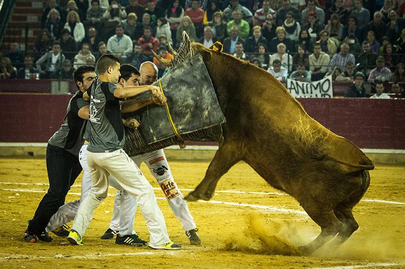 Espectaculares los remates de las vacas de Arriazu y garra en las cuadrillas aragonesas.