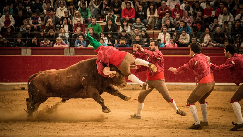 Dos cuadrillas de forcados llevarán la emoción de la tauromaquia portuguesa a los tendidos de La Misericordia.
