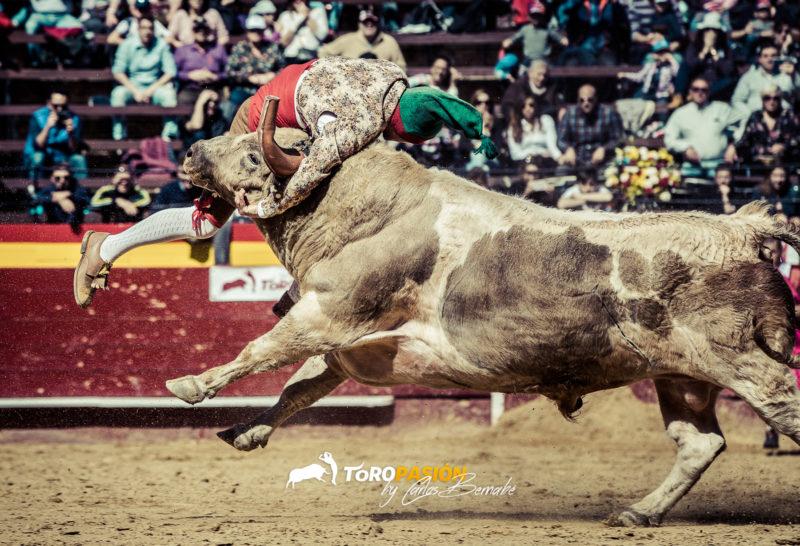 Impresionante pega ante un espectacular y voluminoso toro berrendo en jabonero de D. Fernando Pereira Palha.