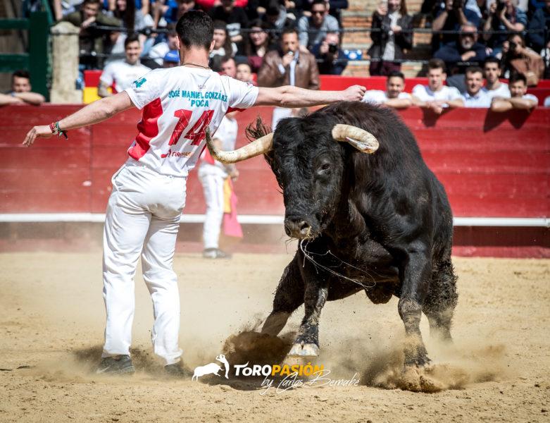 'Poca' conquistó Valencia con quiebros espectaculares y demostración de garra y coraje tras ser cogido de manera espeluznante.