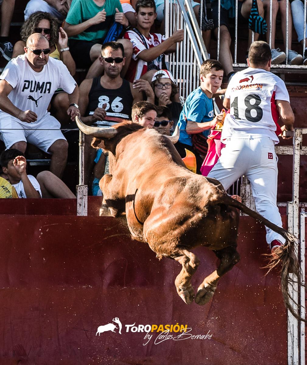 Los toros de Arriazu son conocidos en toda España por su fuerza y agilidad.