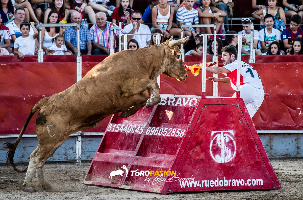 Los toros capones de Arriazu son una garantía de espectáculo.
