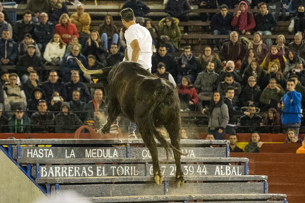 La vaca del millón enfrentará a las 12 mejores vacas de la Comunidad Valenciana, con un premio de 6.000€ a la ganadora.
