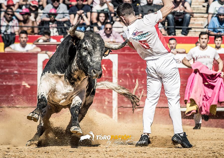 Raúl Flores 'Moreta' ejecutó este ajustado quiebro en el que el astado le prendió de la camiseta.