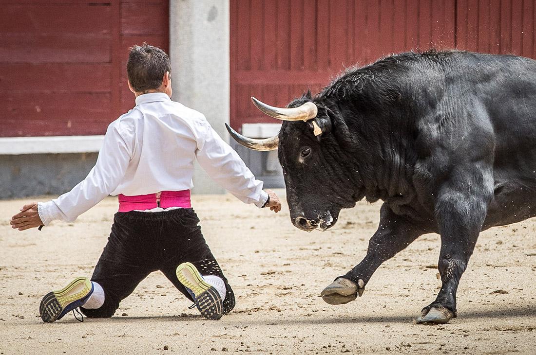 El veterano 'Peque' ejecutando un espectacular quiebro de rodillas en Las Ventas.