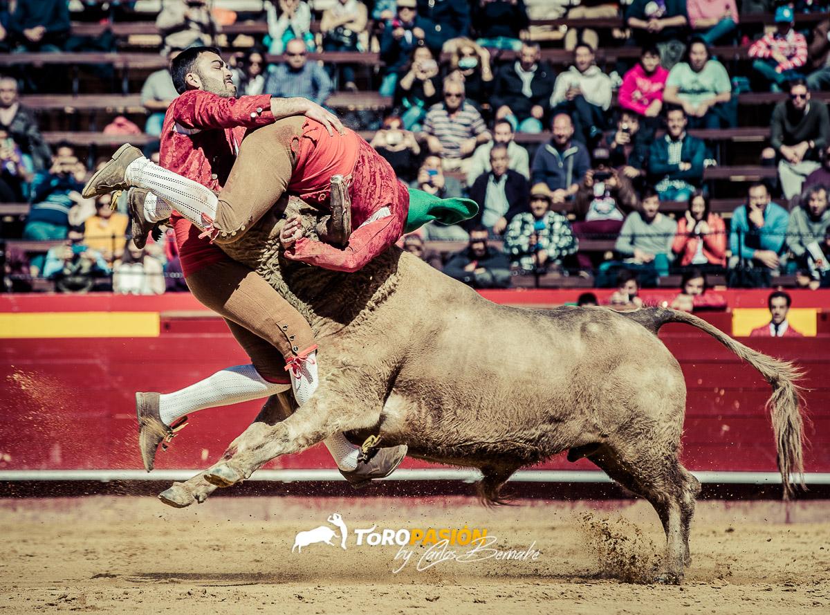 Los forcados es una de las suertes más impactantes de enfrentarse a un toro.