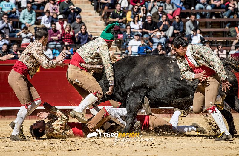 Emoción y riesgo con los forcados portugueses.