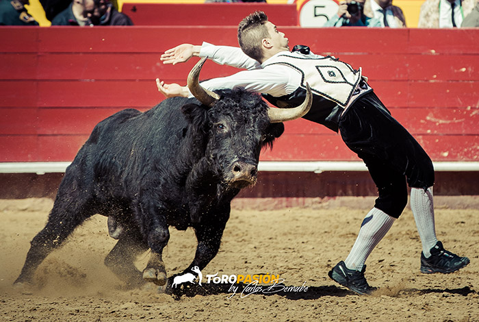 Los cortes y la emoción serán los protagonistas de este festejo con la élite del toreo a cuerpo limpio.