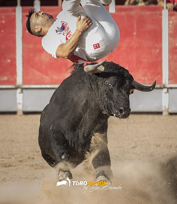 El tres veces Campeón de España, 'Use', debutará en Cenicero con su arrojo y verdad frente a los toros.