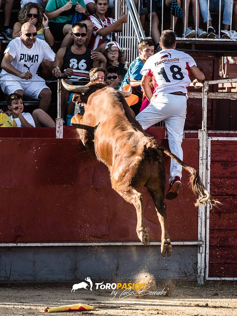 Los toros de Arriazu imponen su poderío en el ruedo.